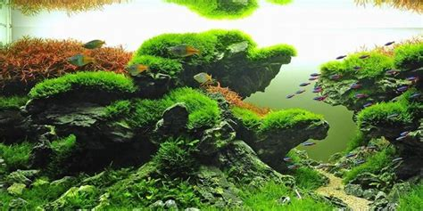 aquascape layout aquascaping styles design ideas and mistakes to avoid