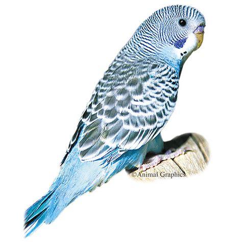 Blue Parakeet | bird Conure, Parakeets & More | PetSmart