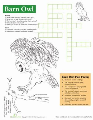 barn owl facts worksheet education