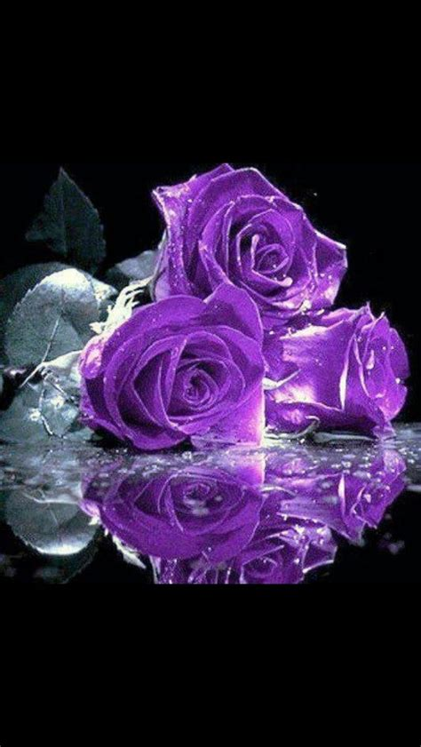 82 Best Purple  Roses Images On Pinterest