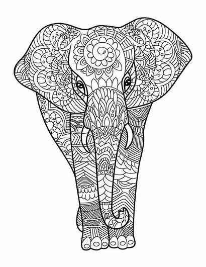 Coloring Animals Adult Amazing Books Adults Pages