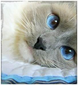 imagenes los gatos bebes mas lindos del mundo Archivos Gatitos Tiernos
