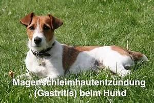 Hund Würmer Hausmittel : gastritis magenschleimhautentz ndung beim hund helfen hausmittel ~ Frokenaadalensverden.com Haus und Dekorationen