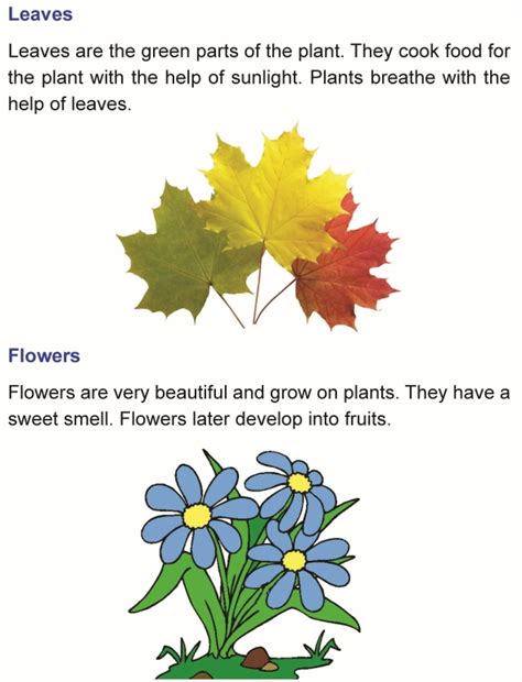 grade  science lesson  parts   plant primary science