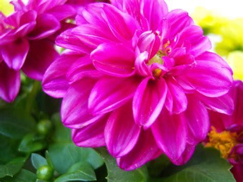 flowers fuschia a fuschia flower by godanna on deviantart