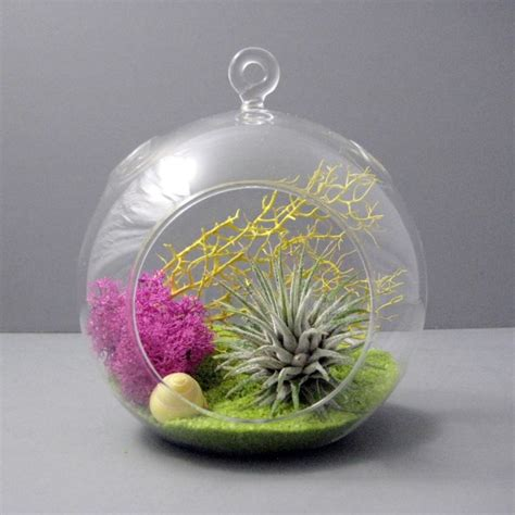 terrarium design create an unforgettable air plant terrarium