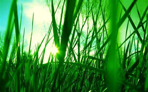 Gras Achtergronden