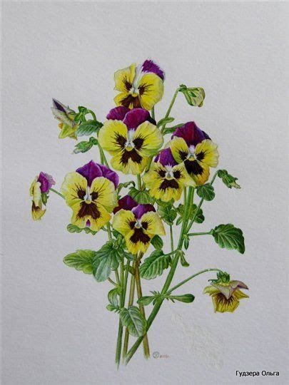Gallery ru / Фото #4 Цветы и букеты 101 (фиалки анютины