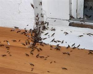 Ungeziefer Im Haushalt Fotos : ameise ~ Whattoseeinmadrid.com Haus und Dekorationen