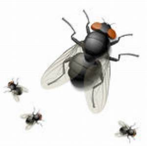 Comment Chasser Les Mouches : comment se d barrasser des mouches ~ Melissatoandfro.com Idées de Décoration