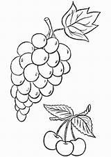Coloring Grapes Weintrauben sketch template