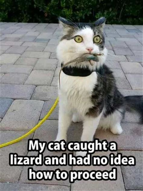 funny animal picture dump   day  pics
