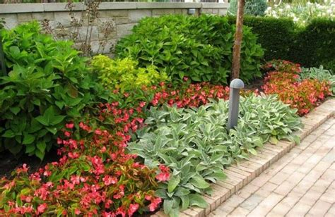 begonias outdoors landscaping and outdoor building begonia landscaping plants annuals begonia landscaping