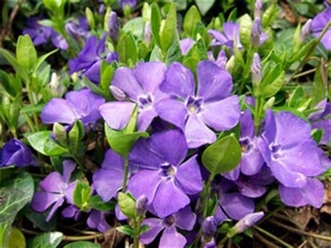 tapis de cuisine violet pervenche vinca