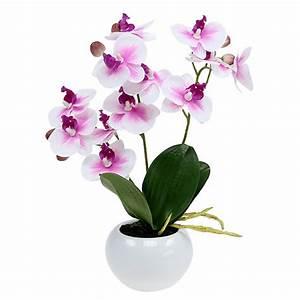 Orchideen Ohne Topf : orchideen im topf h30cm wei rosa kaufen in schweiz ~ Eleganceandgraceweddings.com Haus und Dekorationen