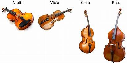 Instruments String Instrument Strings Care Palm