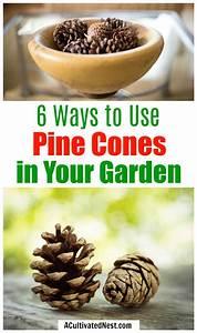 6, Ways, To, Use, Pine, Cones, In, Your, Garden