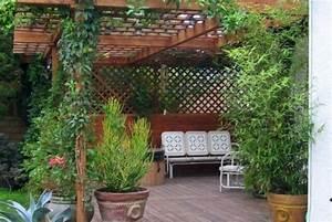 Plante Grimpante Pergola : plante grimpante ombre pour pergola de jardin jardinage ~ Nature-et-papiers.com Idées de Décoration