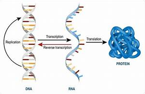 Dna Rna Protein Chemical Molecular Weight Calculator