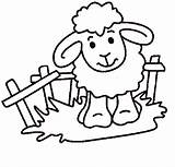 Sheep Coloring sketch template