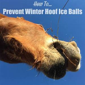 How To    Prevent Winter Hoof Ice Balls  U22c6 The Stuff Of Success
