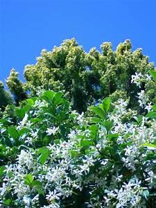 Pflanze Lila Blätter : kostenlose foto baum natur ast bl hen blume rustikal frankreich gr n produzieren ~ Eleganceandgraceweddings.com Haus und Dekorationen