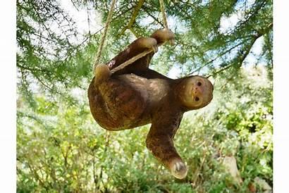 Sloth Garden Hanging Sid Climbing