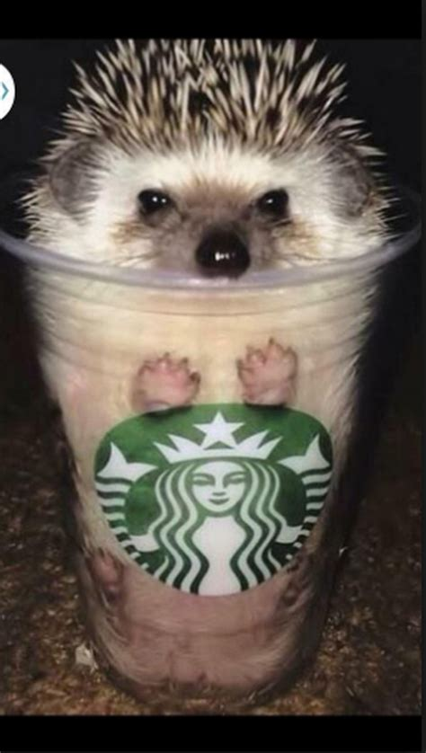 funniest hedgehog pictures weve