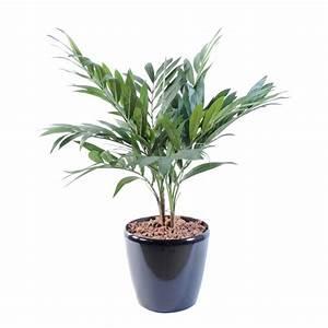 Plante D Intérieur Haute : plante verte d 39 int rieur haute prix achat vente en ligne ~ Dode.kayakingforconservation.com Idées de Décoration