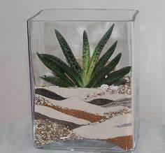 Sukkulenten Im Glas Pflanzen : die 44 besten bilder von sukkulenten im glas ~ Eleganceandgraceweddings.com Haus und Dekorationen