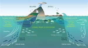 Private Island Diagram