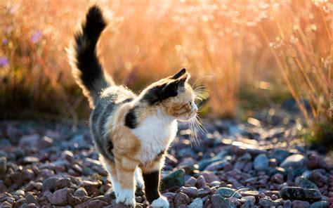 kolorowy kot kamienie