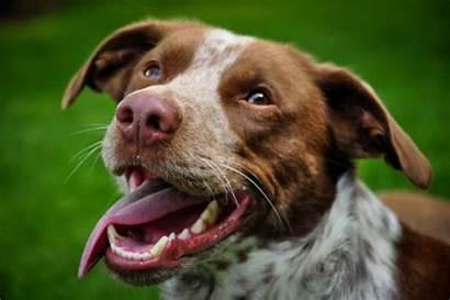 Dog Teeth Toothpaste Recipe Diy Natural Recipes