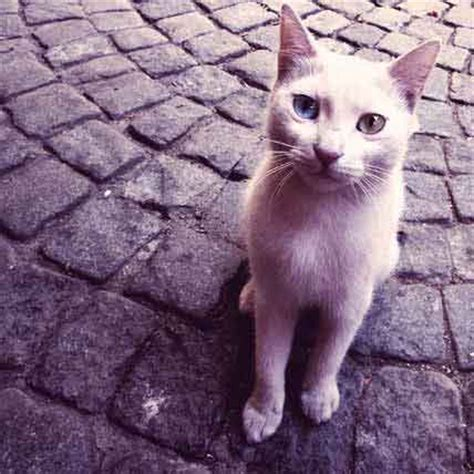cats why mood hyperthyroidism facts cat quickly moody change does petcarerx