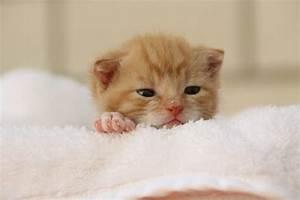 Que Donner A Manger A Un Ecureuil Sauvage : quelle alimentation pour le chaton d un mois deux mois ~ Dallasstarsshop.com Idées de Décoration