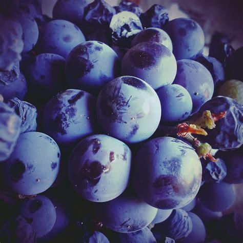 What Is Bleu by Images Gratuites Fruit Fleur Violet P 233 Tale Aliments