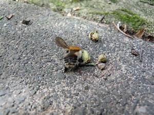 Wie Vertreibe Ich Wespen : wespen und bienen nisten in m llbeuteln mein sch ner ~ Orissabook.com Haus und Dekorationen
