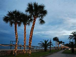 Bright Christmas: What the Holidays Taste Like in Florida ...