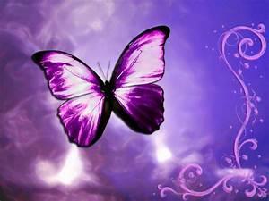 wallpaper: Butterfly Wallpapers