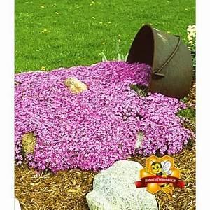 Schattenpflanzen Garten Winterhart : die besten 17 ideen zu chinaschilf auf pinterest ~ Lizthompson.info Haus und Dekorationen