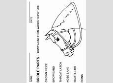 Horse Face Markings Worksheet Calendrier