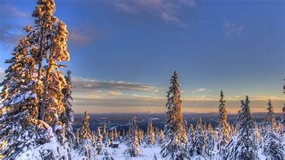 Spruce Norway Sky Snow Under Nature During