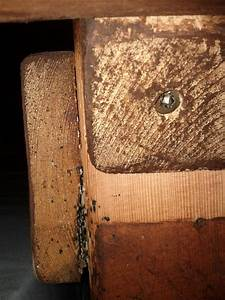 bed bug eggs on wood bangdodo With bed bugs in wood