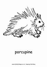 Porcupine Colouring Coloring African Animal Activity Village Explore Drawings Animals Pdf Designlooter sketch template