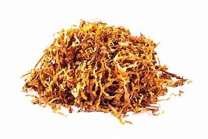 Tobacco Gold Menthol Kendal Express State Shag