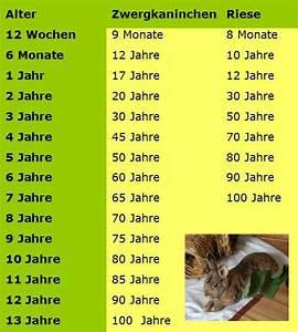 Wie Alt Werden Berner Sennenhunde : wie alt werden kaninchen im durchschnitt gesundheit haltung kaninchen pflege ~ Eleganceandgraceweddings.com Haus und Dekorationen