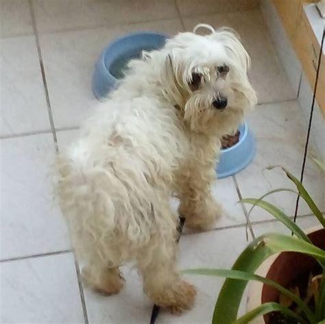 github panagiotisptrstanford dog breeds cnn