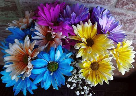 planter blomster buket farverige gratis foto pa pixabay