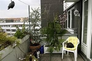 Balkonschutz Für Katzen : balkonien f r katzen geliebte katze magazin ~ Eleganceandgraceweddings.com Haus und Dekorationen