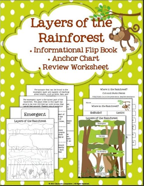 44 Best Images About Rainforest For 5th Grade On Pinterest